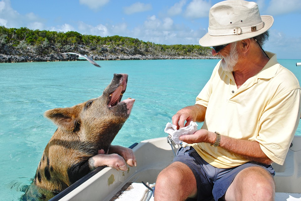 Pig Beach, Swin with Pigs, Things to do in Bahamas